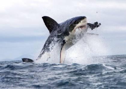 مقتل رجل جرّأء تعرضه لهجوم من سمكة قرش