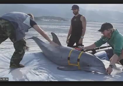 """فيديو: جيش الإحتلال يدرب أسماك دولفين على للعثور على غواصي """"حماس"""""""