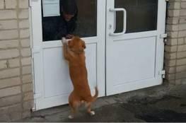 فيديو.. كلب ينتظر صاحبه لأسابيع عند باب المشفى