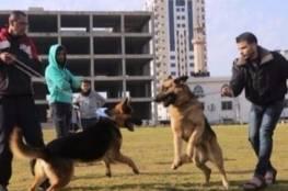 الداخلية بغزة تصدر قراراً بمنع اصطحاب الكلاب في الأماكن العامة
