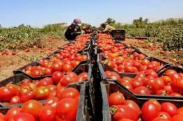 """الزراعة: ادعاءات وشروط الاحتلال لتسويق البندورة """"محض أكاذيب"""""""