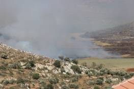 مستوطنون يقتلعون 150 شجرة زيتون في بورين جنوب نابلس
