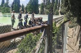 عشرات المستوطنين يقتحمون برك سليمان بحماية جيش الاحتلال