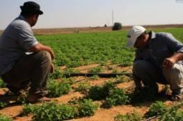 الشعبية تدعو لتعزيز صمود المزارع لحماية الأرض وتعزيز الاقتصاد