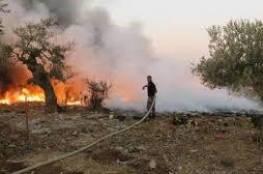 السيطرة على حريق أشجار إمتد لمساحة واسعة جنوب جنين