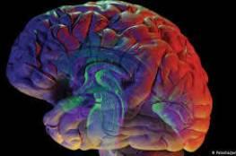 الباحثون يحللون آلية الدماغ للإدمان بالمخدرات