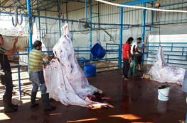 """""""الزراعة بغزة"""" تعلن كمية الأضاحي التي تم استهلاكها خلال العيد"""
