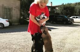 ليدي غاغا تعرض نصف مليون دولار مكافأة لمن يعيد كلبيها  المسروقين