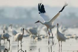 نفوق 80% من الطيور الجارحة في سيبيريا والسبب ؟