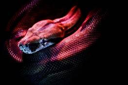 دراسة تكشف انفجار مفاجئ في التطور شهدته الثعابين بعد القضاء على الديناصورات قبل 66 مليون عام