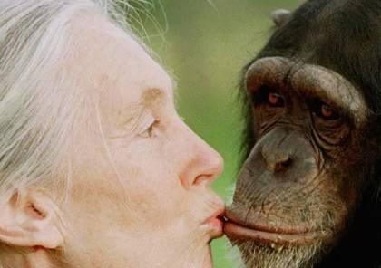إجراء أول عملية تهجين بين إنسان وقرد في الصين