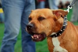 المغرب.. القبض على شخص هاجم الشرطة مستخدما كلبا شرسا