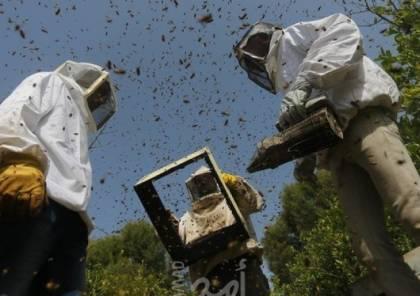 غزة: خسائر فادحة في قطاع النحل بسبب موجة الحر
