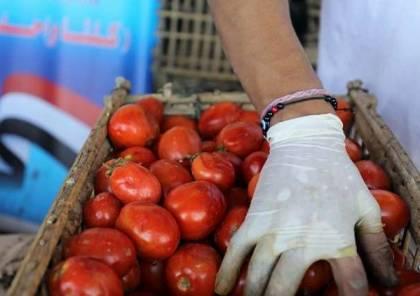 كارثة خطيرة في بذور طماطم (023) تنتظر مصر