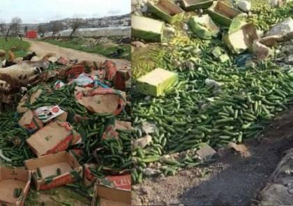 مزارعون يُتلفون منتجاتهم بسبب انخفاض أسعار الخضراوات .. وغضب في أوساط المواطنين