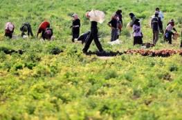 الإغاثة الزراعية تختتم مشروع تعزيز صمود المزارعين في عصيرة الشمالية