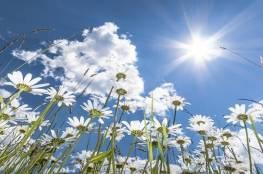 دراسة: استغل ضوء الشمس كما يجب وسيكون عقلك ممتنا للغاية!