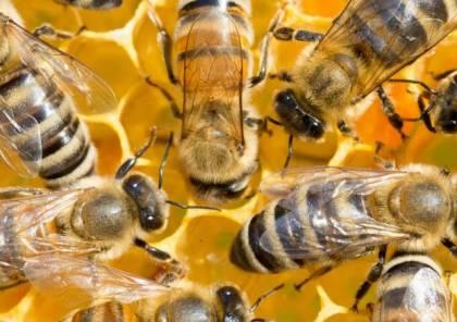 هذه فوائد النوم في غرفة واحدة مع النحل!
