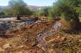 المستوطنون يغرقون حقول الزيتون والمشمش في سبسطية بالمياه العادمة