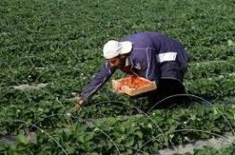 الإغاثة الزراعية تحذر من انعكاسات سلبية لارتفاع الحرارة على المحاصيل الزراعية