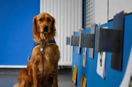"""""""بوكا"""" أول كلب  يرصد المصابين بكورونا في فرنسا"""