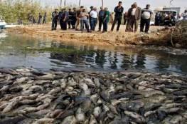 اكتشاف فيروس جديد يصيب الأسماك بالعراق