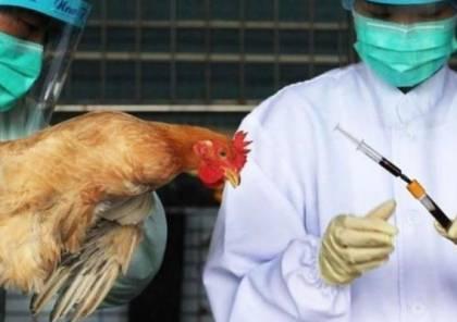 الحكومة البريطانية تعلن اكتشاف بؤرة لإنفلونزا الطيور