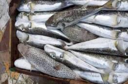 لجان الصيادين بغزة تنشر تنويهاً هاماً للمواطنين بشأن خطورة سمكة الأرنب