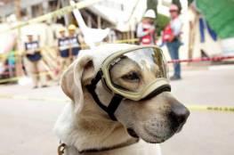 """""""كلبة"""" تسطر بطولات في إنقاذ ضحايا الكوارث"""