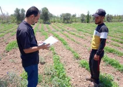 الاغاثة الزراعية تنفذ زيارات ارشادية للمزارعين في قطاع غزة