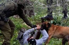 الأسرى: جنود الاحتلال تعمدوا ترك كلب بوليسي ينهش رقبة فتى قاصر خلال الاعتقال