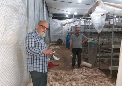 قطاع الدواجن بغزة يتعرض لخسائر فادحة بسبب موجة الحر
