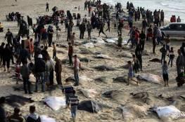 """صور: أسماك """"الوطواط """" تملأ شباك صيادي غزة وسط فرحة الاهالي"""