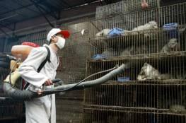 وكالة :الصحة العالمية تربط ظهور كورونا بتجارة الحيوانات في الصين