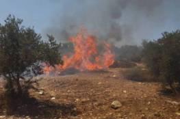 جنين: حريق يأتي على 50 شجرة زيتون