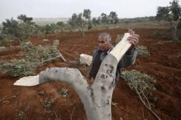 وزير الزراعة: نتوقع أن تصل نسبة إنتاج زيت الزيتون للعام الجاري 15 ألف طن