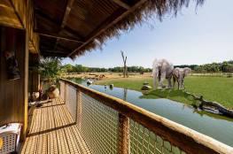 فندق في بريطانيا يوفّر رؤية الأفيال والفهود عن قرب..!