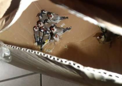 الجمارك الاسرائيلية تضبط طيور مهربة على معبر الكرامة