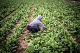 غزة: تعليمات هامة للمزارعين لتفادي موجة الحر