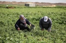 زراعة غزة: 16 مليون دولار خسائر القطاع الزراعي بسبب إغلاق المعابر