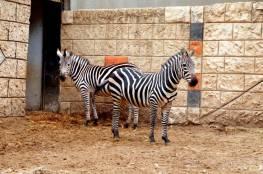 حديقة الحيوان في قلقيلية ستفتح أبوابها اعتبارا من يوم غد الثلاثاء