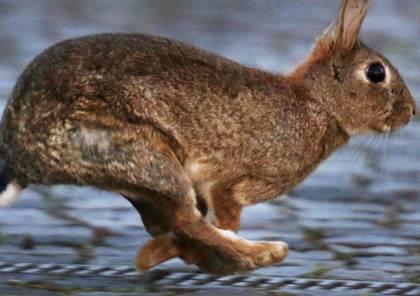 دولة أوروبية تطالب مواطنيها بالتكاثر مثل الأرانب