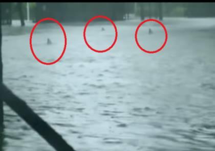 بالفيديو.. أسماك قرش تظهر في شوارع ميامي بفعل الاعصار!