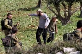 """مستوطنو """"ألون موريه"""" يسرقون ثمار 90 شجرة زيتون في دير الحطب"""