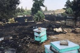 حريق في قلقيلية يأتي على خلايا النحل قرب سياج الفصل العنصري