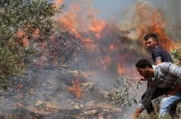 مستوطنون يضرمون النيران بأراضي مادما
