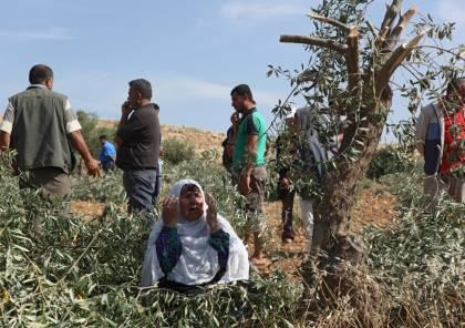 مستوطنون يقتلعون مئات اشتال الكرمة جنوب بيت لحم