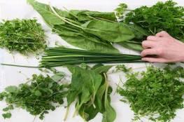 أكثر الأعشاب فائدة لجسم الإنسان!