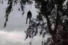 العثور على جثة مسن مشنوقا على شجرة