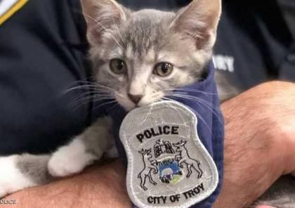 """قطة تعين بالشرطة.. ومراسم """"رسمية"""" لأداء اليمين"""